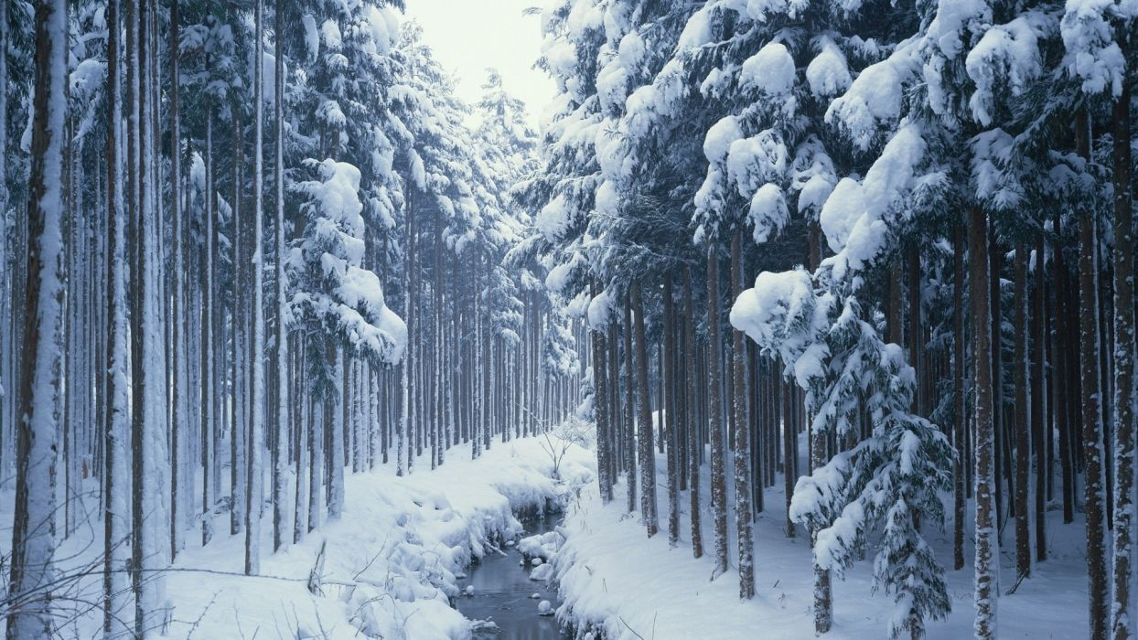 nature rivers landscapes river stream trees forest winter snow seasons wallpaper