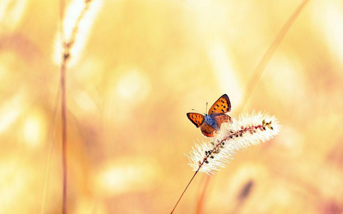 animals insects butterfly grass plants fields wings bokeh wallpaper