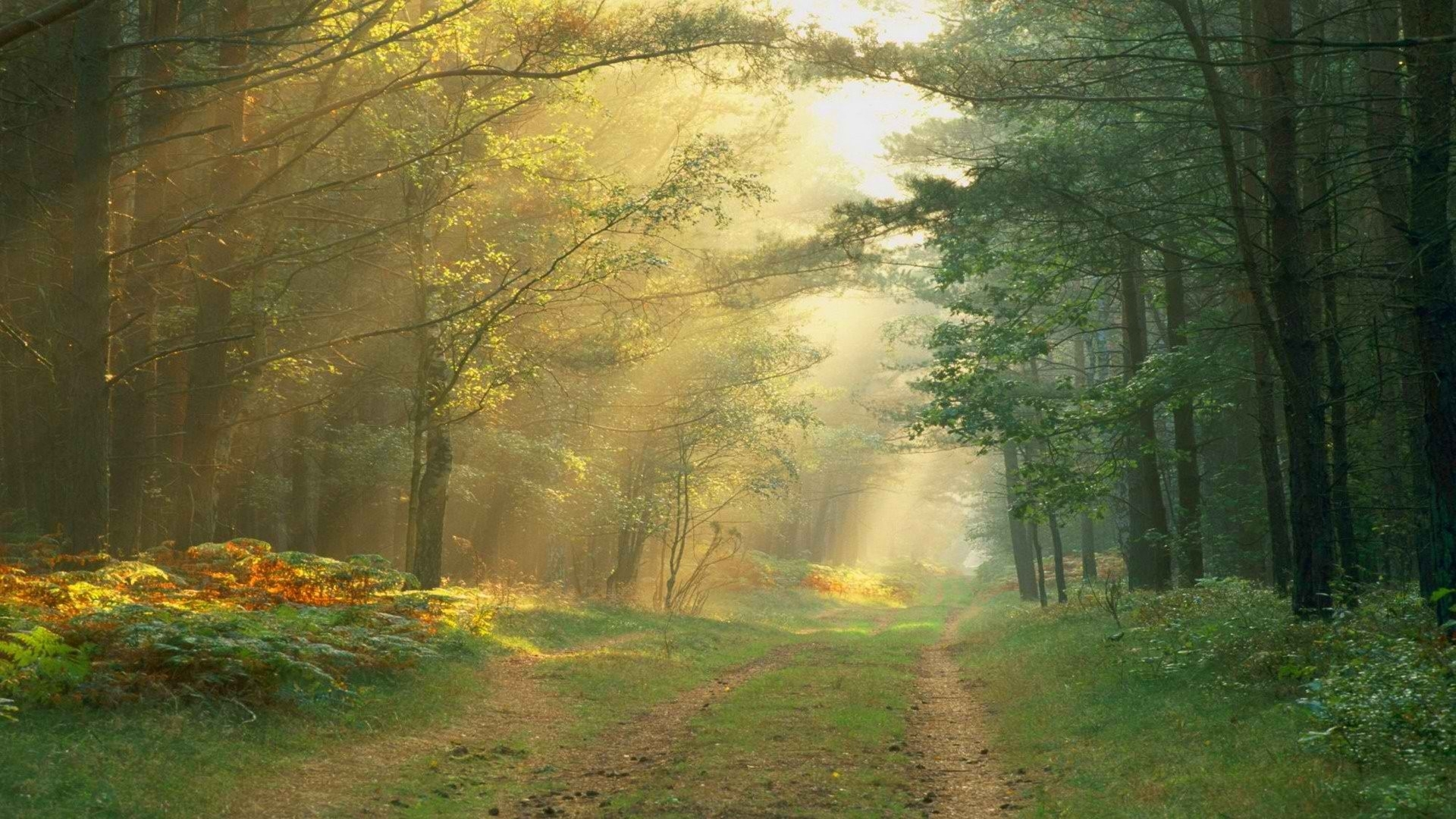 Morning Sunbeams Forests Nature Background Wallpapers on
