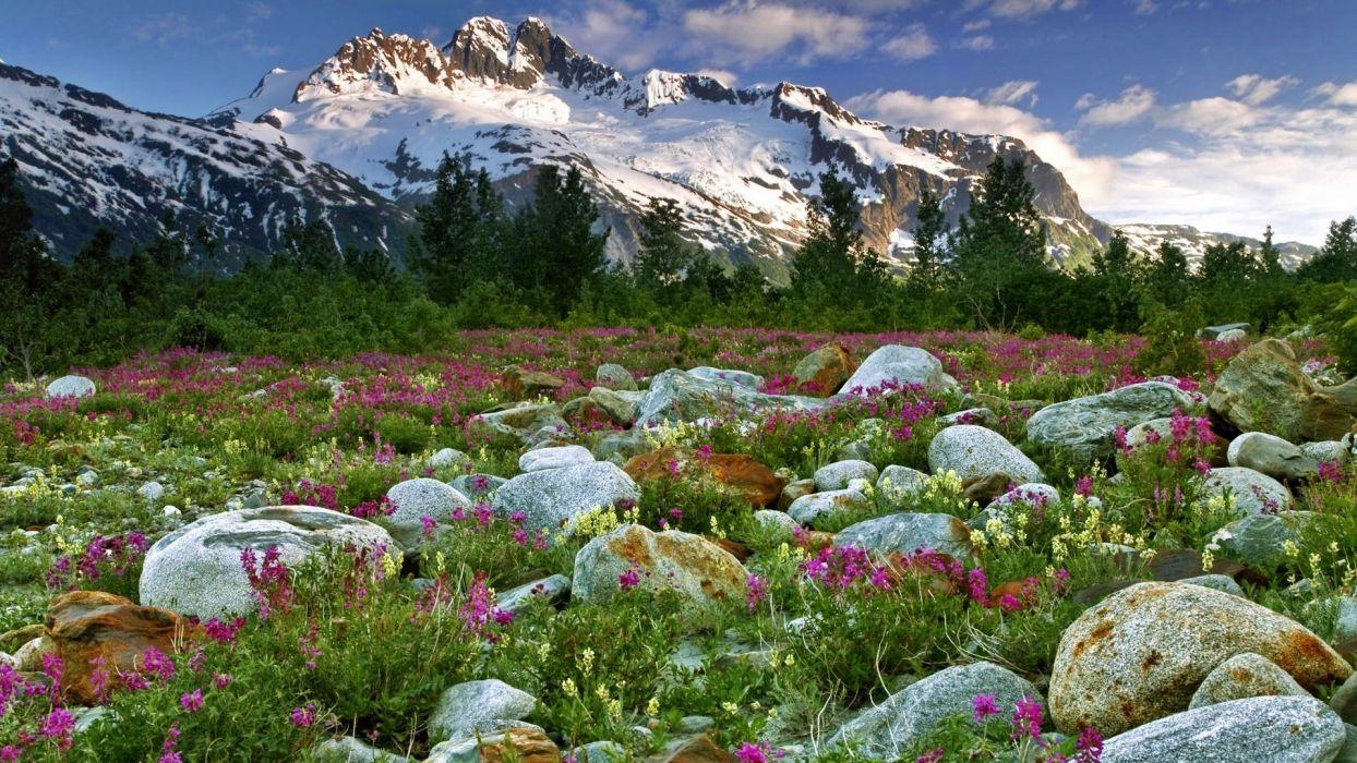 canada british columbia nature landscapes meadow mountains snow peacks ridge plants flowers stone rock wallpaper