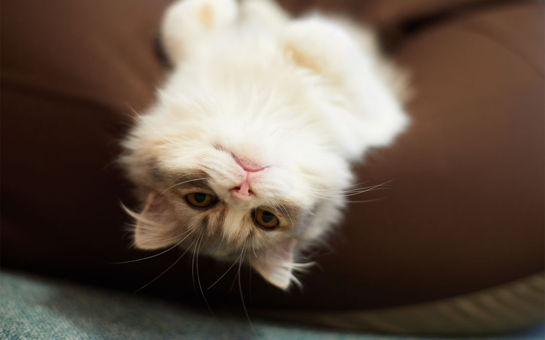 animals cats humor funny pov face eyes whiskers wallpaper
