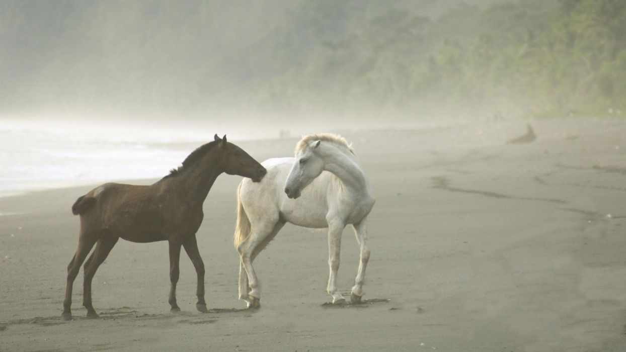 animals horses nature beaches ocean sea shoretrees fog wallpaper