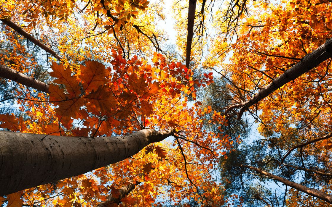 nature trees treetops autumn fall seasons leaves sky sunlight color wallpaper