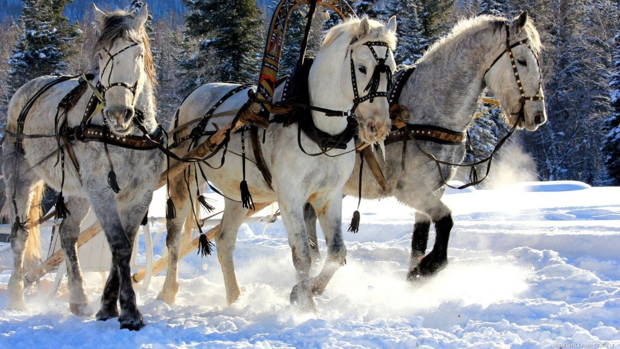 animals horses nature winter snow rustic trees wallpaper