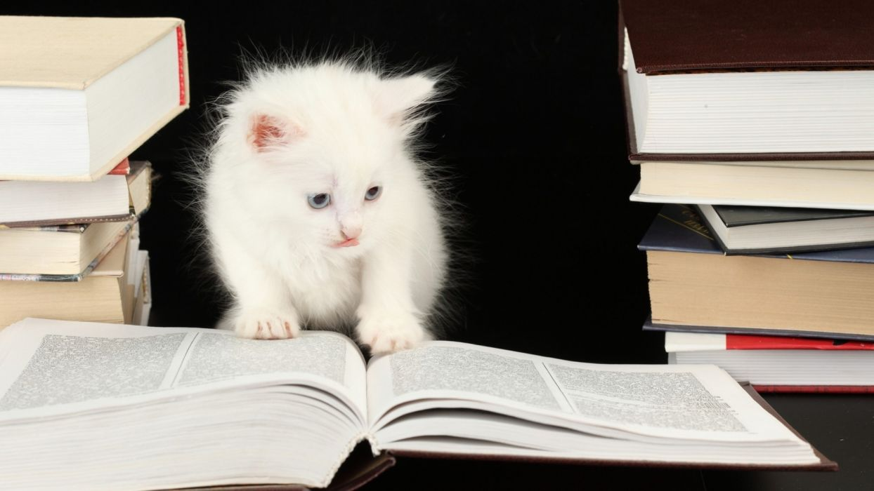 animals cats felines kittens cute whiskers eyes books humor funny wallpaper
