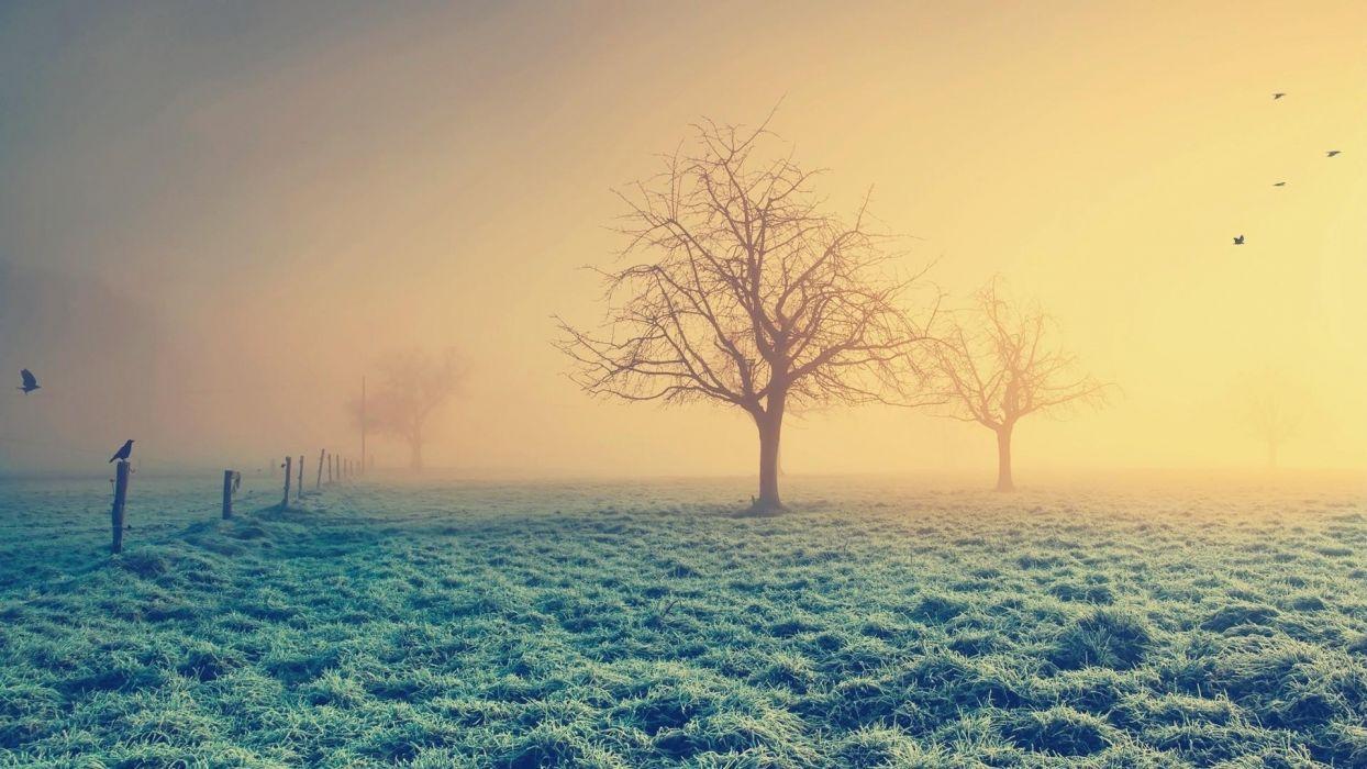 nature landscapes fields grass fog mist trees sunlight sunrise sunset animals birds raven crows dew frost wallpaper