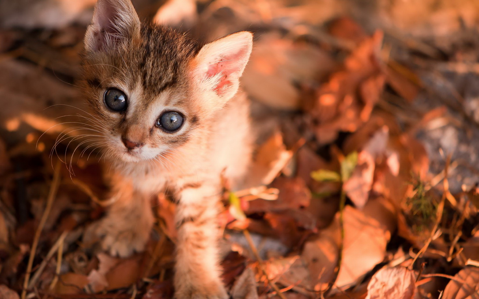 Image result for cute animals autumn