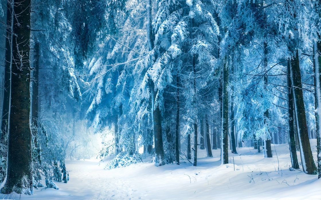 nature landscapes trees forest path roads trail winter snow seasons wallpaper