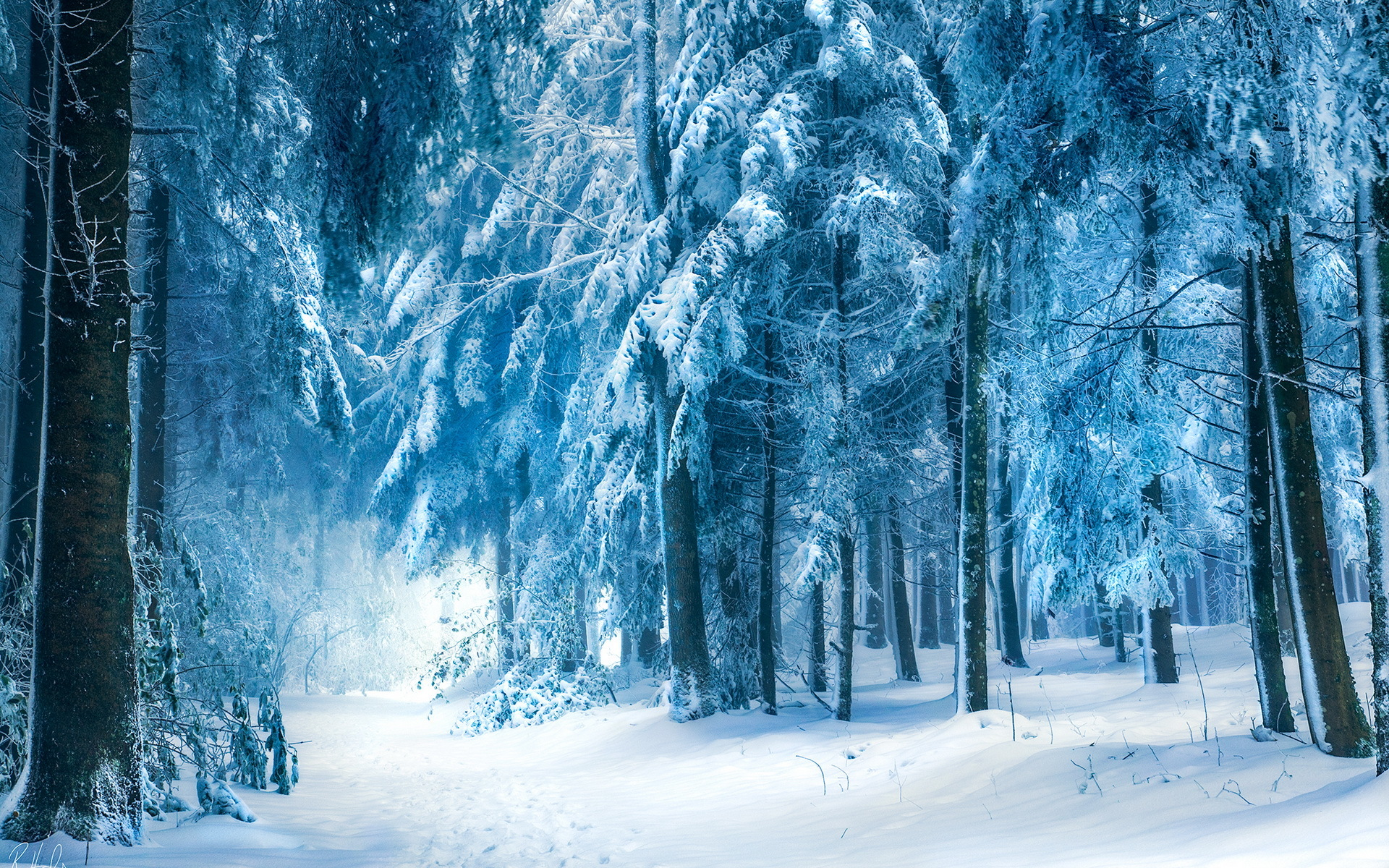 snow path wallpapers - photo #29