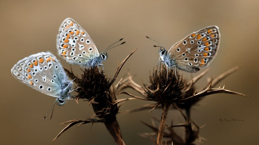 animals insect butterfly nature macro close up wallpaper
