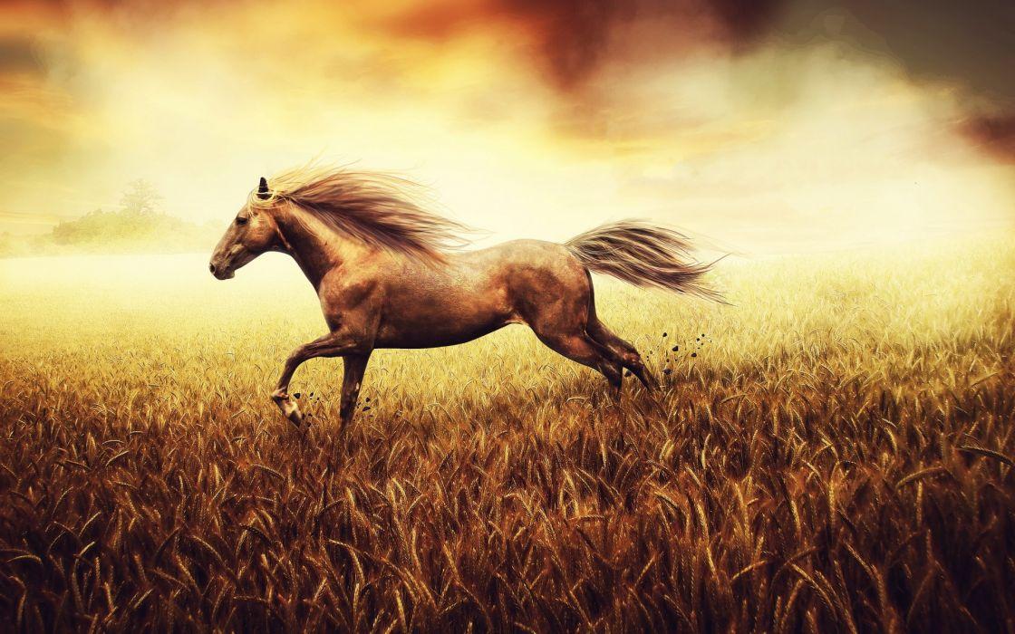 animals horses landscapes grass wallpaper