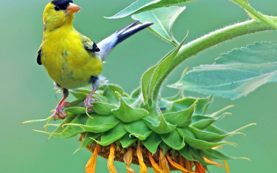 nature animals birds color flowers leaves plants wallpaper