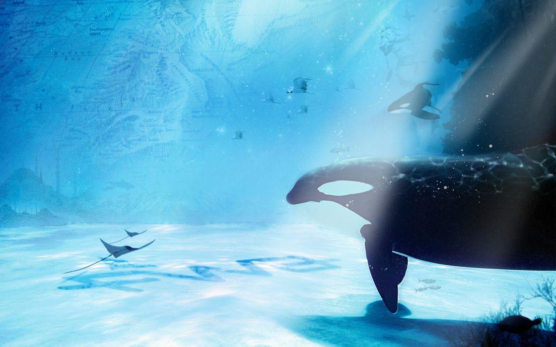 animals whales underwater sea ocean manta sting ray sealife art cg digital sunlight wallpaper