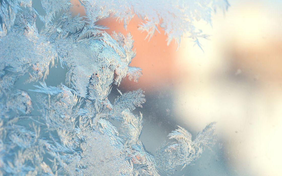 nature frost winter seasons window glass mood bokeh cold freezing photography wallpaper