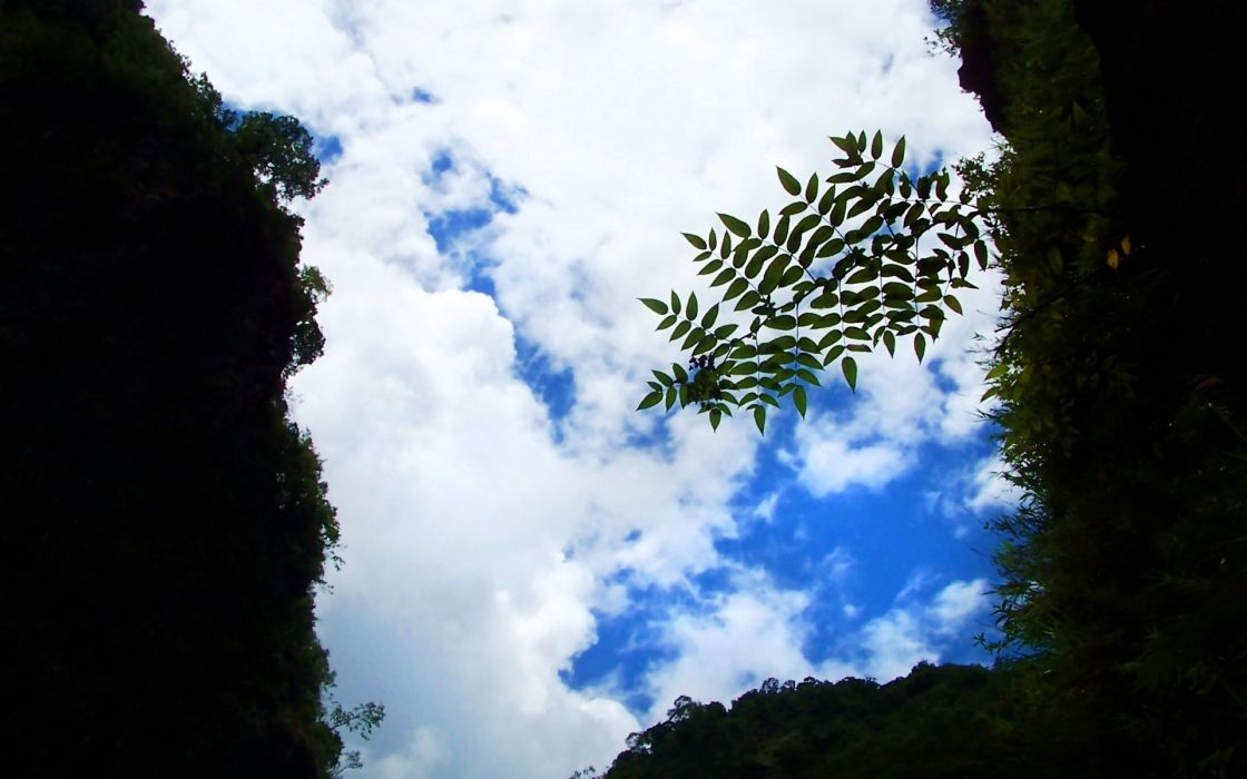 nature landscapes plants leaves tunnel sky clouds wallpaper