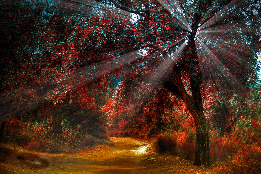 nature landscapes trees forest path trail roads plants red hdr sunlight sunbeam autumn fall seasons wallpaper