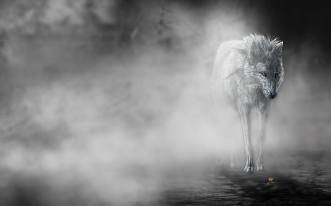 Animals Wolf Wolves Predator Fantasy Mood Emotion Art Fog