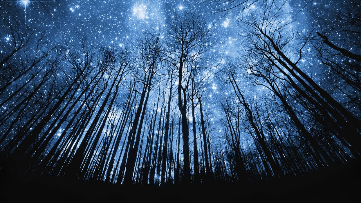 nature space sky trees forest hill mountaun silhouette stars manipulation cg digital art bright starlight wallpaper