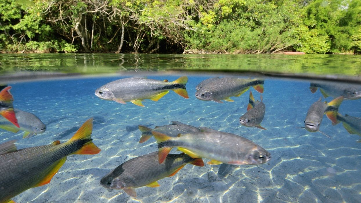 animals fishes underwater tropical trees forest jungle nature wallpaper