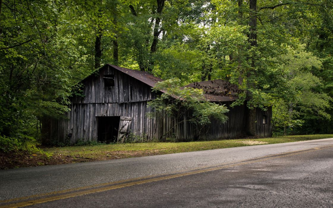world roads architecture buildings ruin decay abandoned trees forest leaves wallpaper