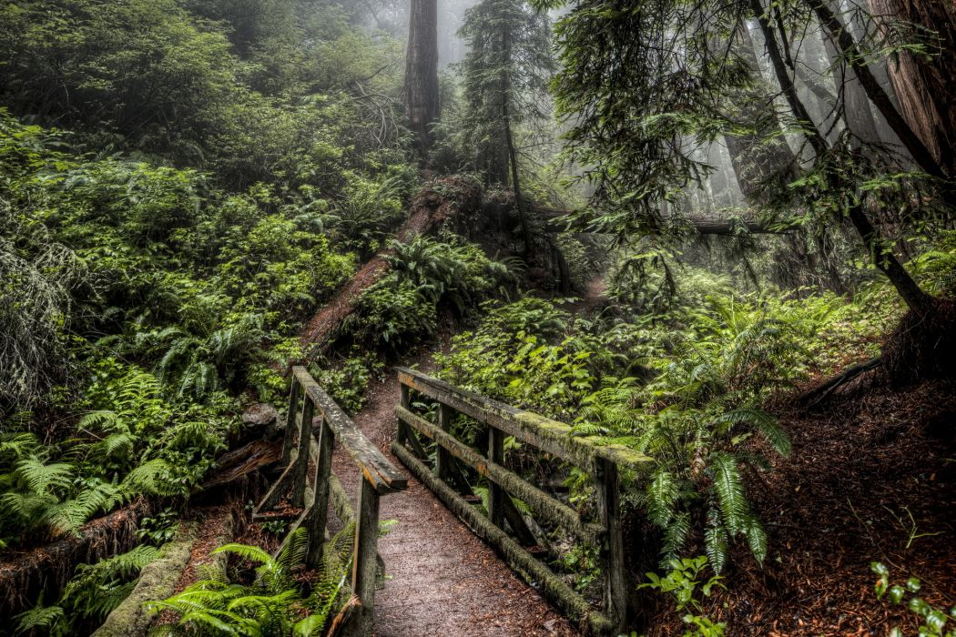 nature landscapes trees forest plants fern architecture bridges hdr green jungle fog wallpaper