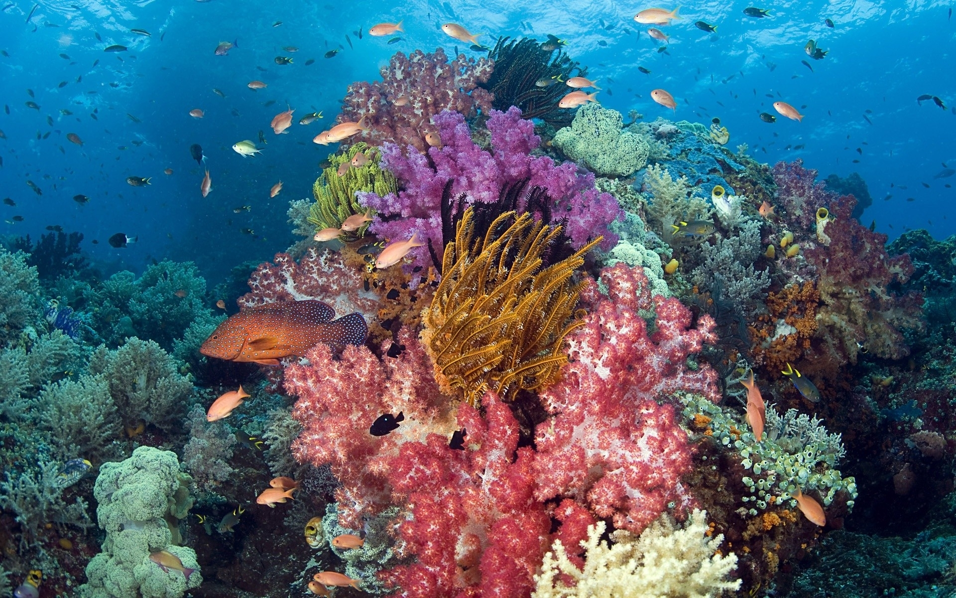 Nature animals fishes tropical underwater coral reef ocean ...