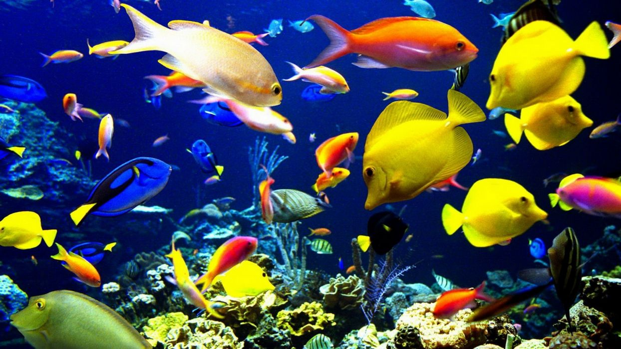 Nature Animals Sealife Tropical Fishes Color Underwater Sea Ocean Coral Reef Wallpaper
