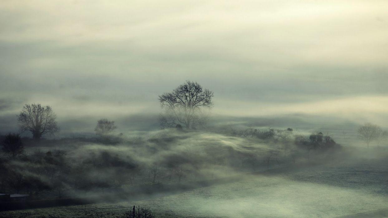 trees fog mood wallpaper