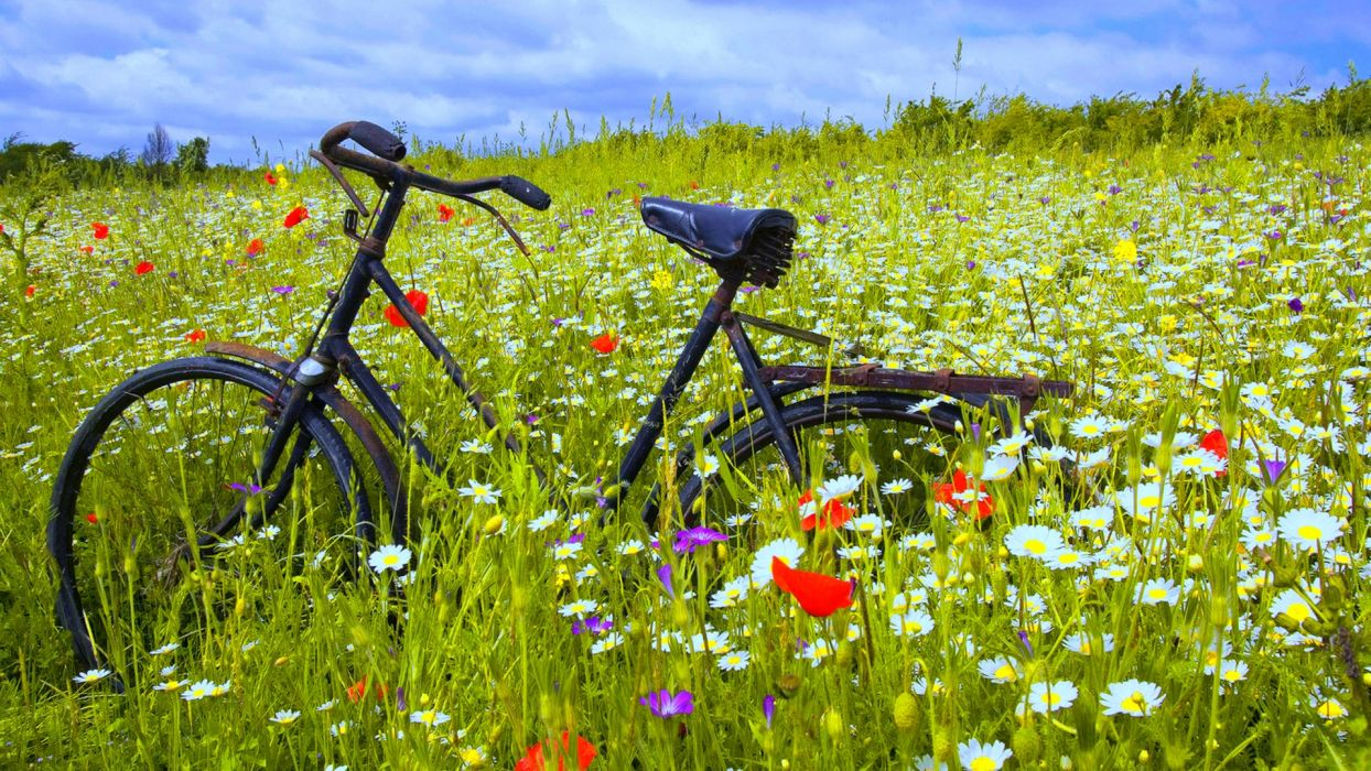 bicycles bokeh mood flowers landscapes wallpaper