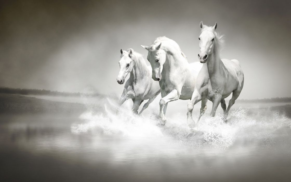 horses cg digital art manipulation ocean sea beaches waves wallpaper