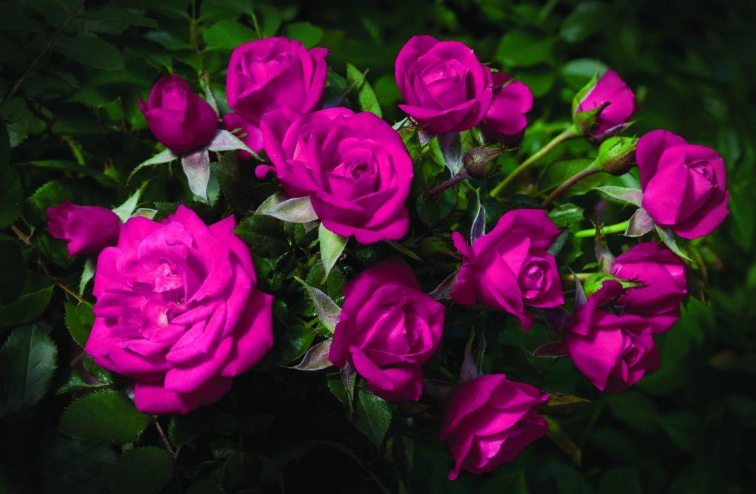 bouquet color flowers pink wallpaper
