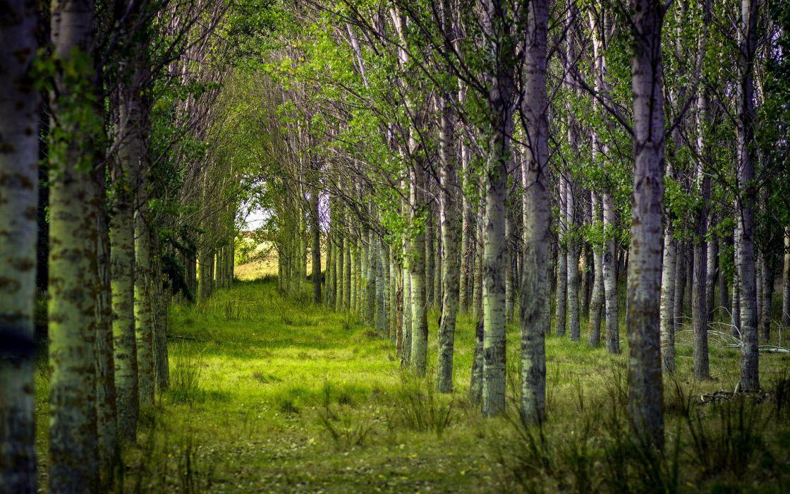 landscapes leaves spring wallpaper