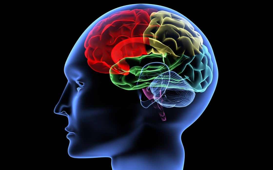 people brain cg digital art x-ray x ray color image psychedelic anatomy wallpaper