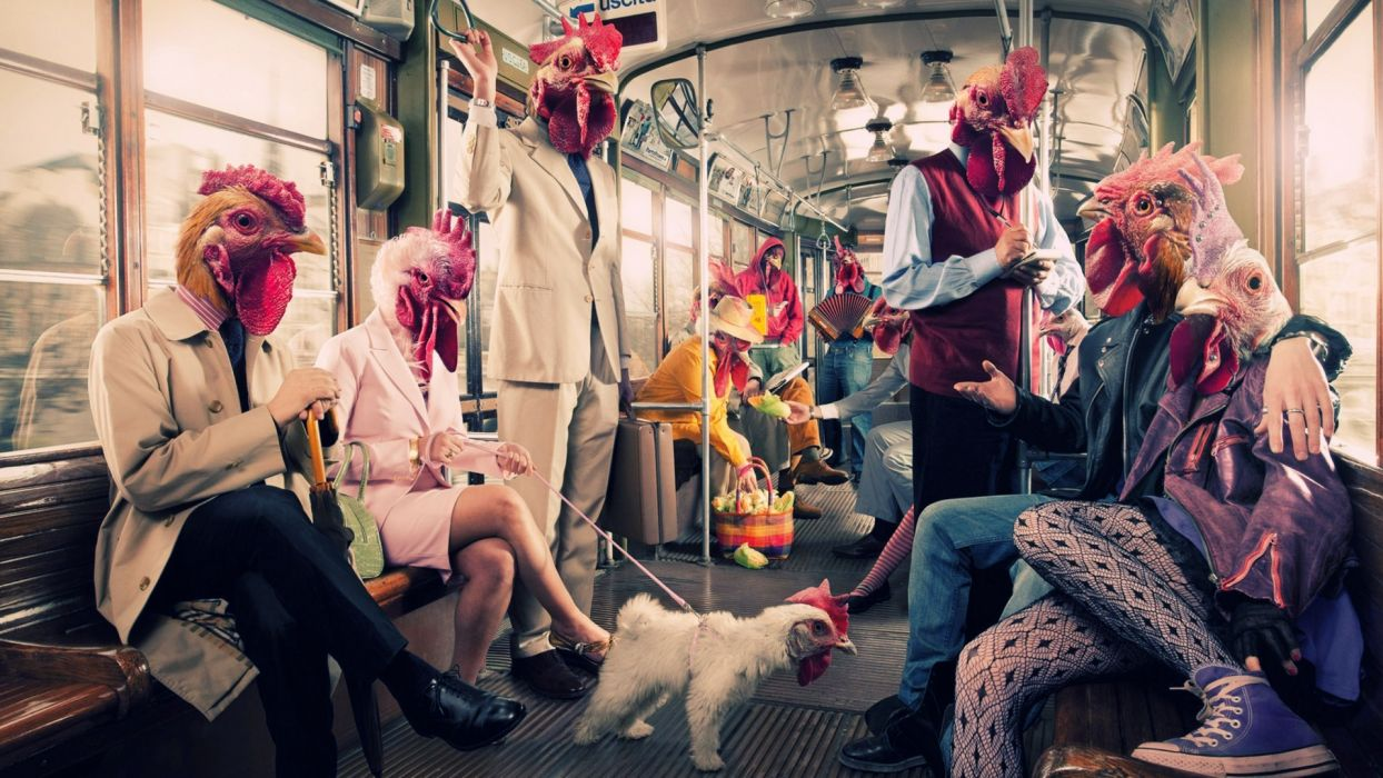 humor animal chicken manipulation situation people cg digital art wallpaper