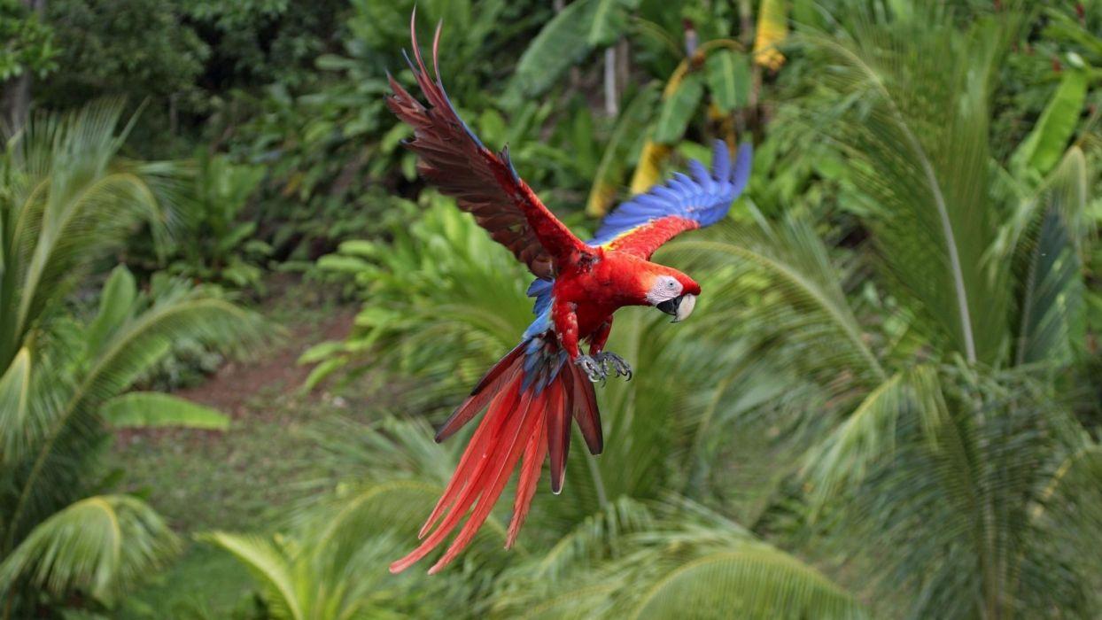 parrots tropical flight color wallpaper
