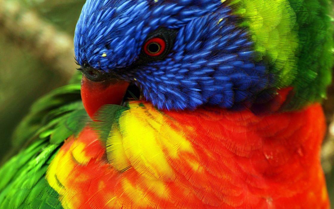 parrots color eyes tropical wallpaper