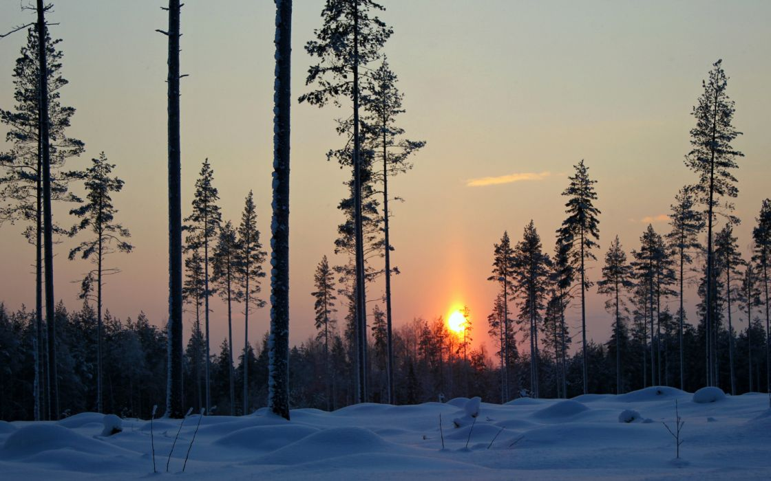 landscapes trees winter snow sunset sunrise sky wallpaper