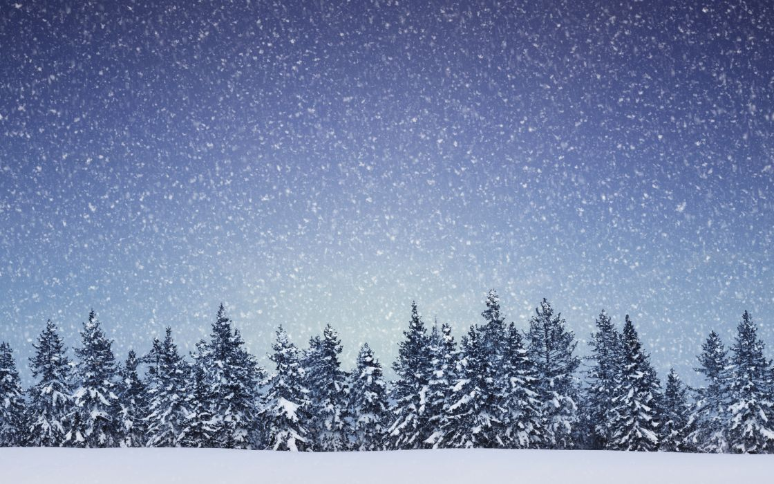 nature landscapes trees forest winter snow snowing flakes wallpaper