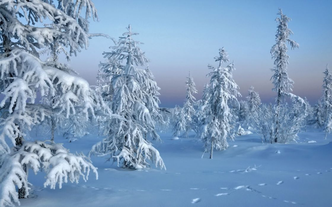 landscapes winter snow white wallpaper