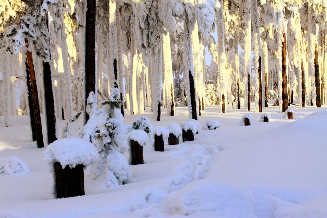 landscapes trees forest trail path prints winter snow white wallpaper