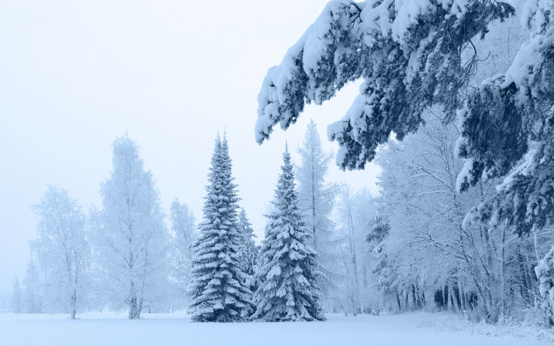landscapes wintert snow trees forest wallpaper