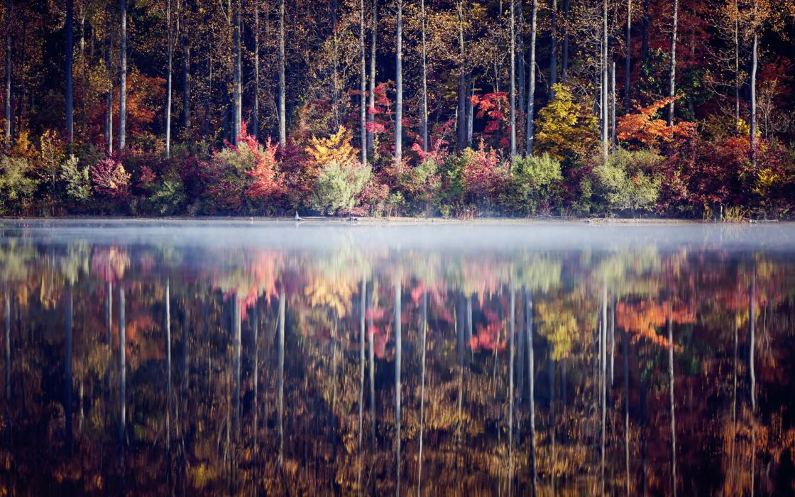 fog water reflection fog trees forest leaves autumn fall wallpaper