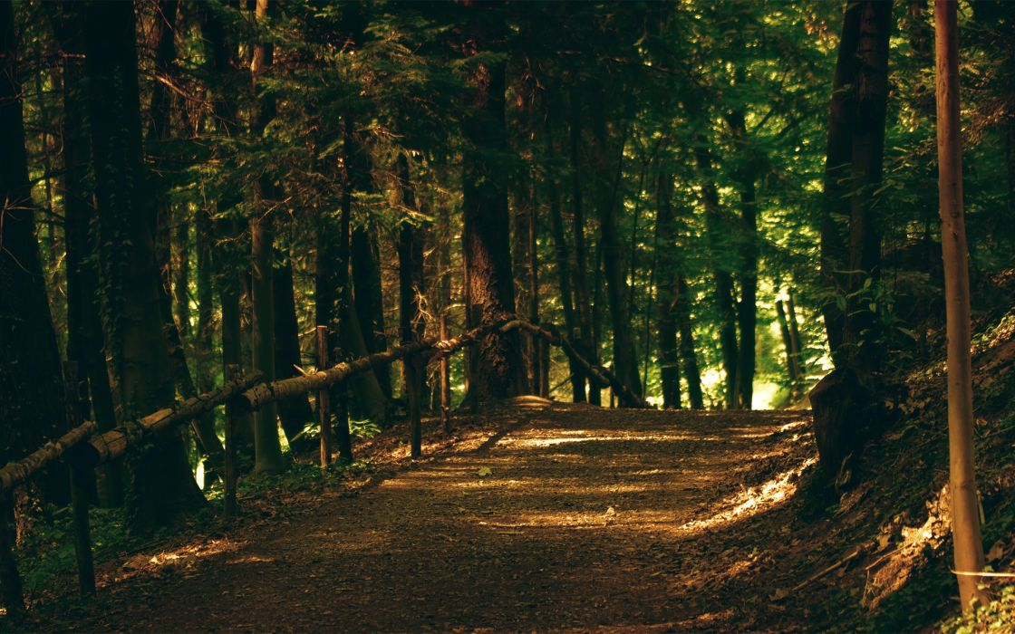 forest path trail fence wallpaper