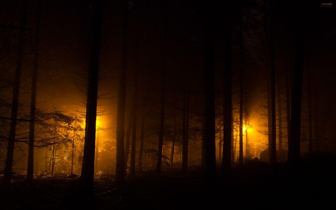 forest dark night lights wallpaper