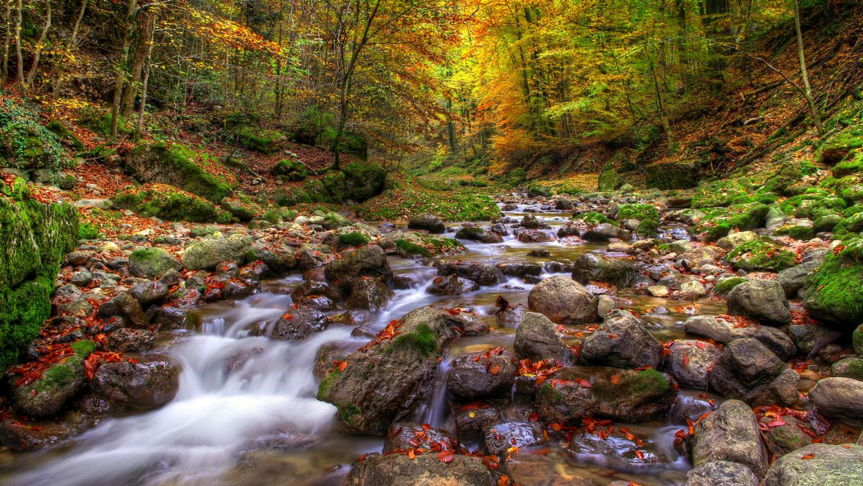 trees forest autumn fall wallpaper