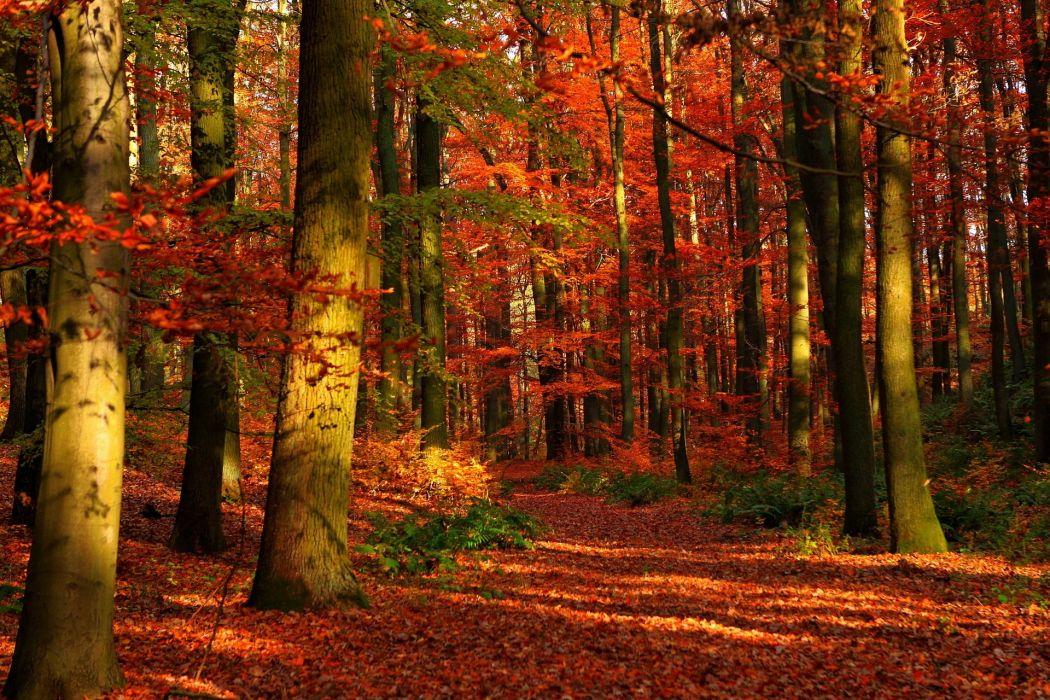 forest autumn fall wallpaper