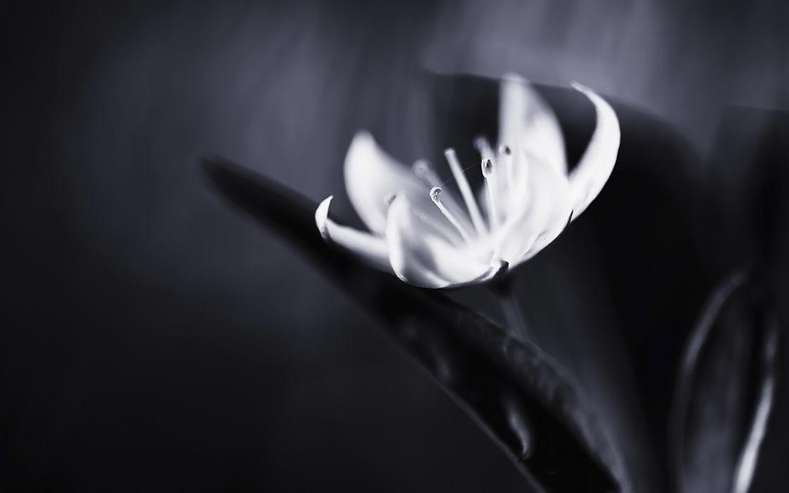 black white macro wallpaper