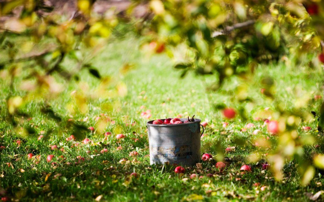 fruit apples trees wallpaper