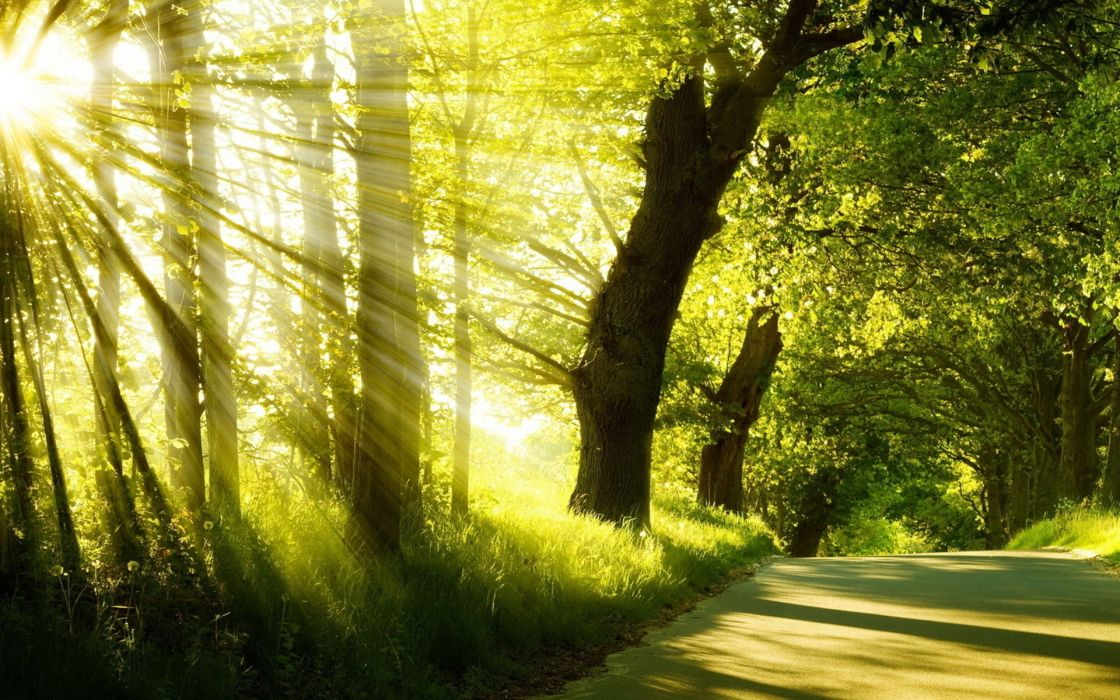 forest sunlight beams ray roads wallpaper