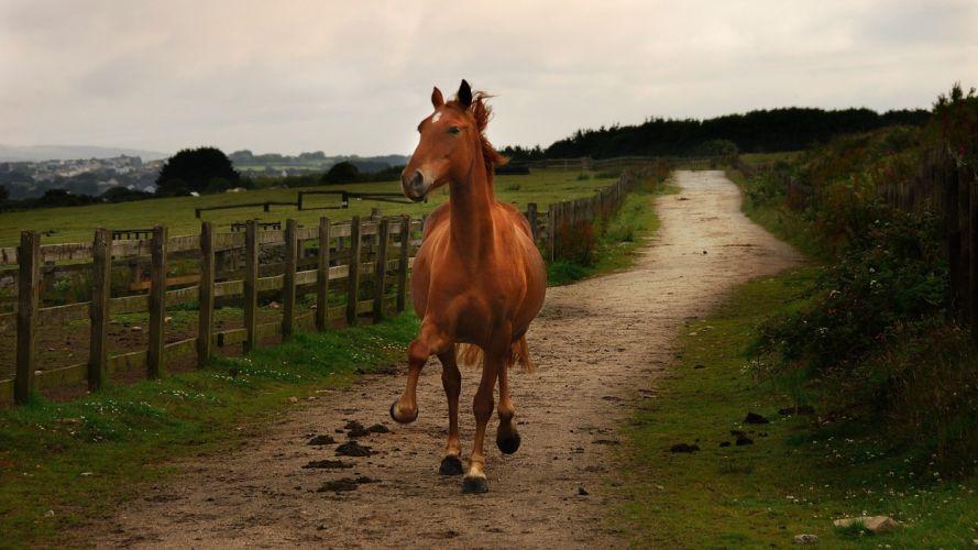 horses fence wallpaper